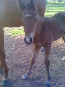 Our foal - Rosie